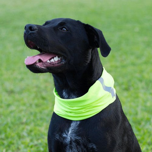 SA Co. Bandana dla Psa Dog Shield™ Reflective Electric Green