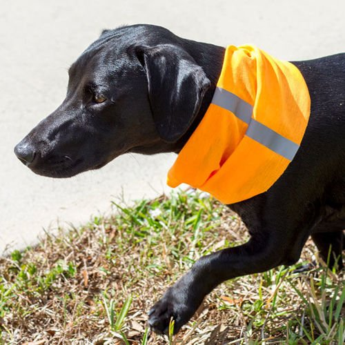 SA Co. Bandana dla Psa Dog Shield™ Reflective Electric Orange